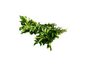 green-curry-leaves 1bunch